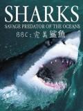 BBC完美鲨鱼