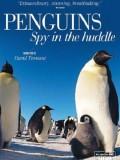 BBC企鹅间谍