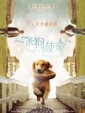 一条狗的使命 英语版